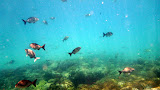 Swimming Through A School of Fish - Noumea, New Caledonia