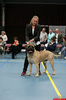 20130510-Bullmastiff-Worldcup-0782.jpg