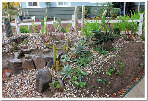 121202_Davis_succulent_garden01