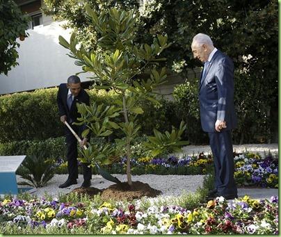the obama tree