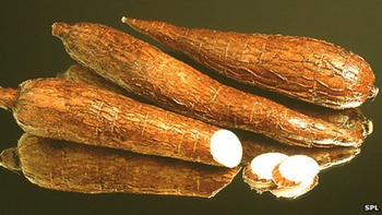 Cassava roots. UN scientists are warning that a virus attacking the cassava plant is nearing an epidemic in parts of Africa. BBC