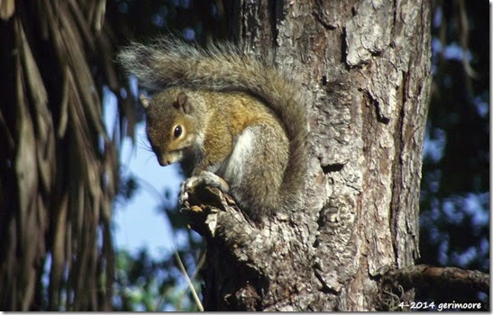 squirrel wildlife 011