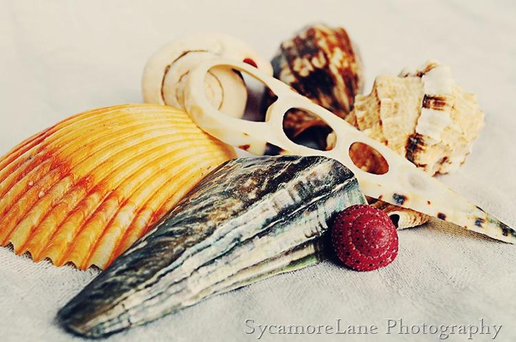 shells-1-w