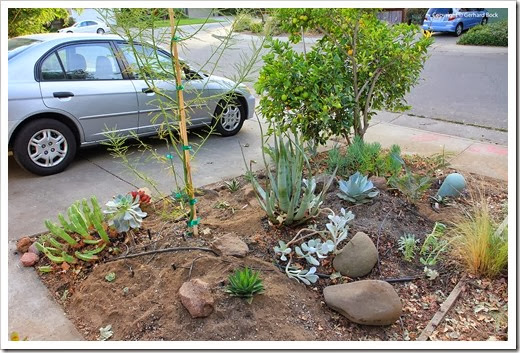131007_driveway_succulent_bed_after_17