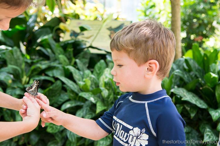 Callaway Gardens butterfly garden blog-20