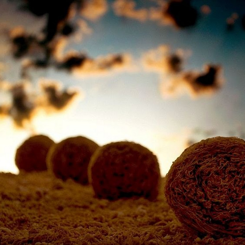 Ernie Button Creates Miniature Landscapes Using Cereals