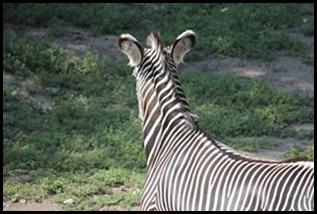 Zoo5 050