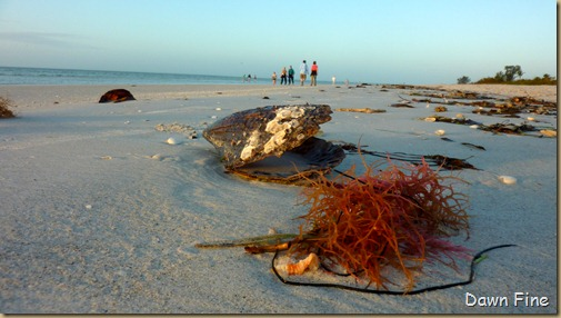 morning sanibel_020