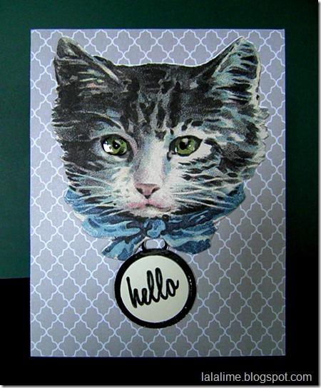 Cat-Tag1a_Barb-Derksen