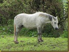 IMG_0763 Horse