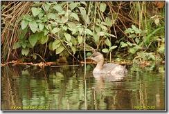 Bradgate Park D50  27-10-2012 13-12-014