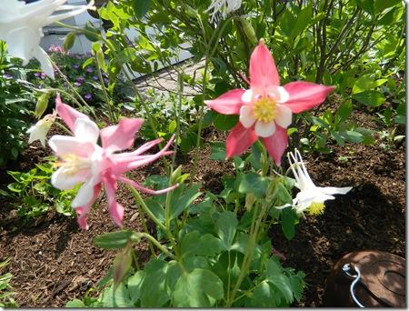 Flowers summer2011 008