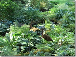 Butchart Gardens 50