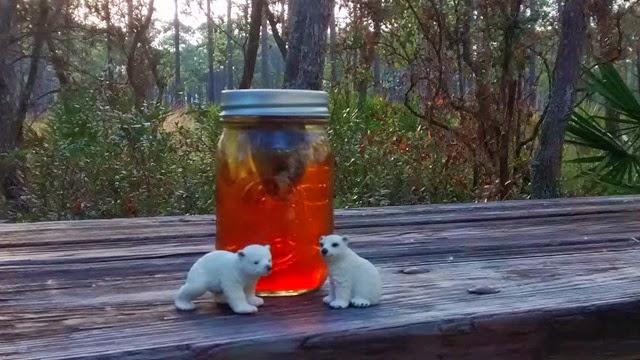 Polar Bears Ochlockonee State Park
