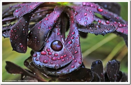 141101_afer_the_rain_017