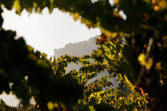 Vinyes al peu de Montsant.DO Montsant.Cornudella, Priorat, Tarragona