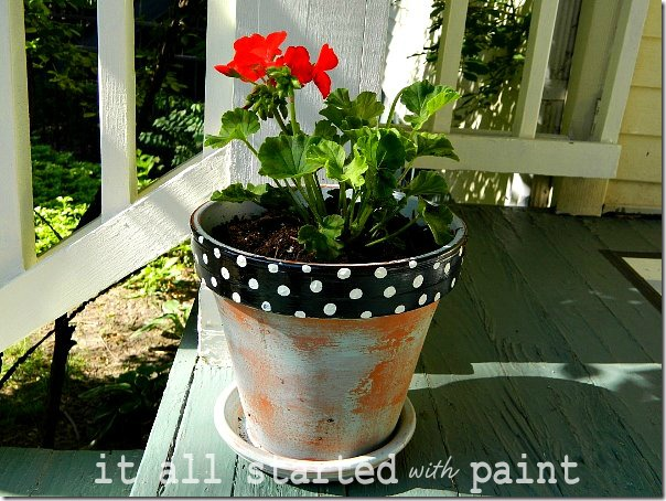 terracotta_pot_with_geranium