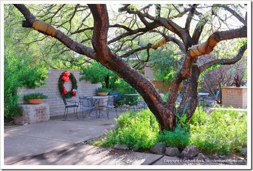 131203_TucsonBotanicalGarden_133