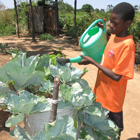 Olinga uses bag gardens to grow food in the hot weather.