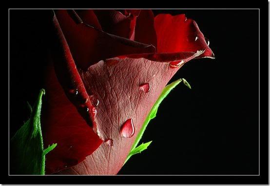 flor día del amor (3)