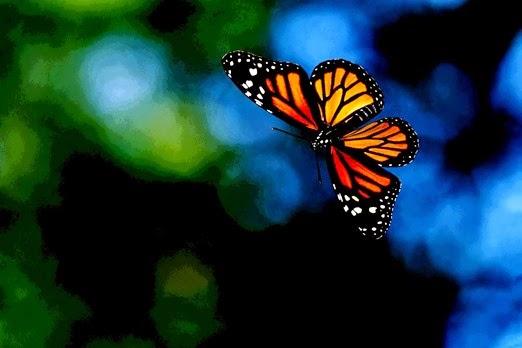 imagen_de_una_mariposa_volando-other