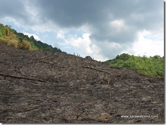 slash_burn_farming_08