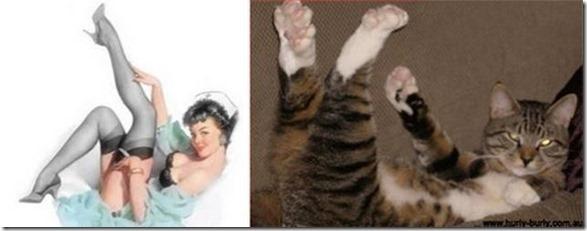 cats-pinup-models-10