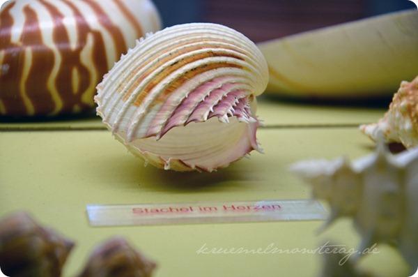 Wremen 20zwölf Tag 5 Muschelmuseum (15)