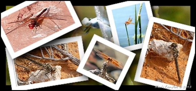 2013 Dragonflies