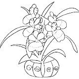 orchidee7.jpg