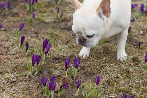 Enjoying More Spring Flowers