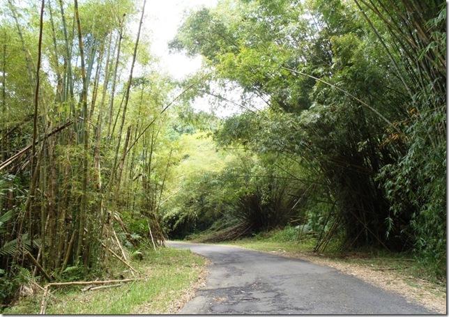 017h bambus satt