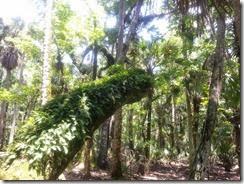 Ferns on oak