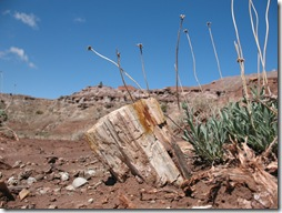 2012-04-15 Petrified Wood, Fry Canyon, UT (27)