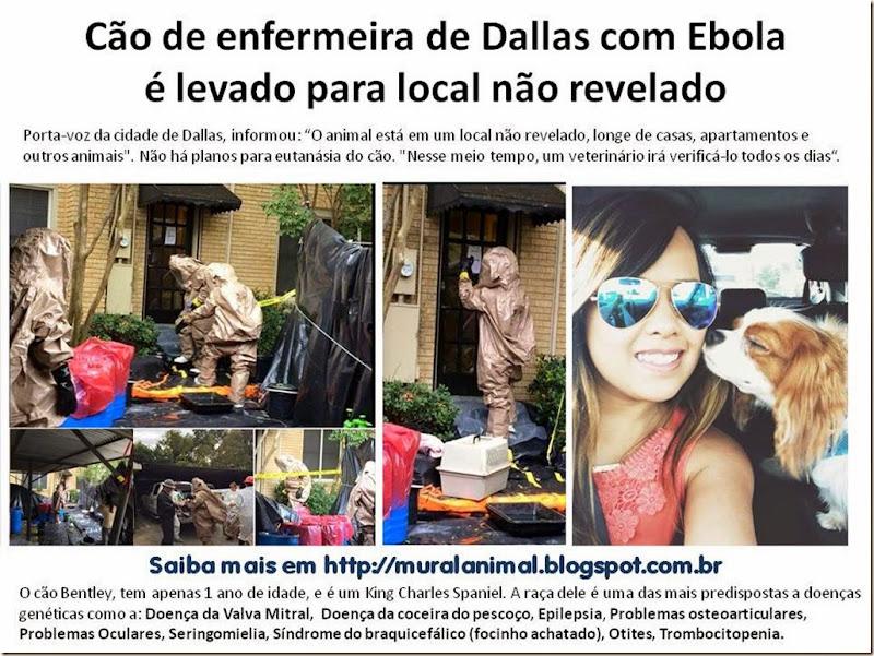 Cão de enfermeira de Dallas com Ebola1
