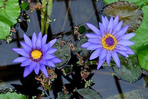 Azul - Glória Ishizaka 60