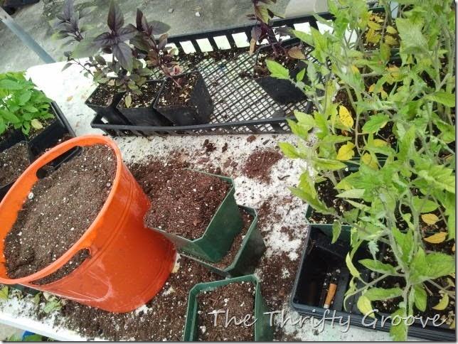 contianer garden 3