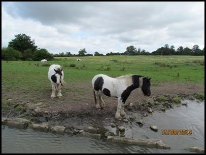 3 Gypsy Horses