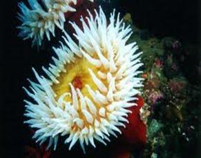 Amazing Pictures of Animals, photo, Nature, exotic, funny, incredibel, Zoo, Sea anemones, Actiniaria, Alex (7)