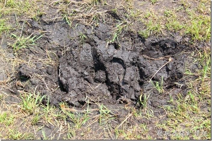 南投頭社活盆地。這活盤地的地質屬於泥炭土,也就是富含「碳」元素。