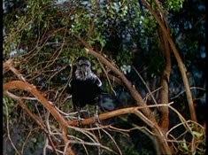 26 le corbeau