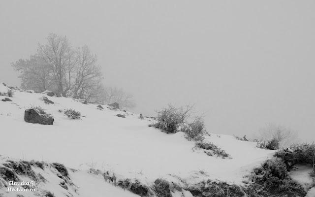 Macin-iarna-04_rw.jpg