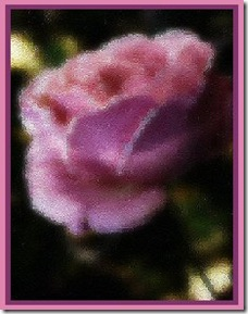 LITE PINK ROSE RS