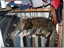 hung cat