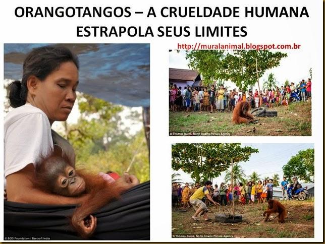 oragotango (2)