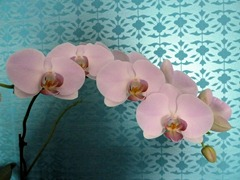 2013-orchid2