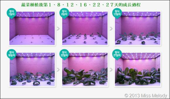 LED蔬菜成長過程