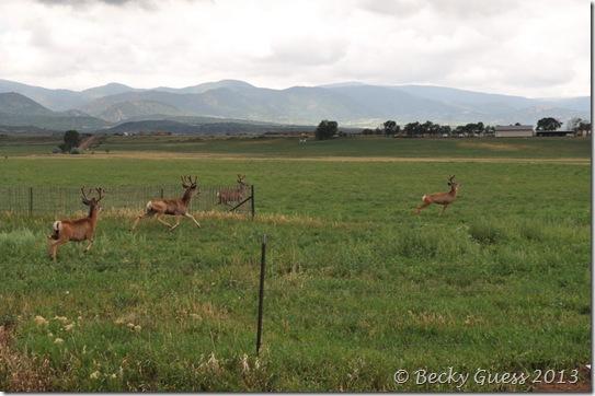 08-07-13 deer near LaVeta 08