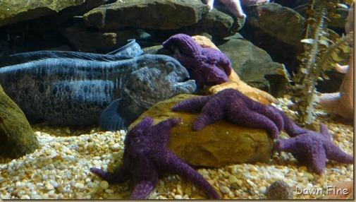 Atlanta Aquarium_162