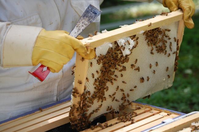 Παράπονα του Μελισσοκομικού Συνεταιρισμού Κεφαλονιάς για τις παραγγελίες μελιού από την Ε.Ο.Δ.